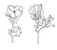 Декоративный цветок мака чертежа чернил с листьями Стоковая Фотография