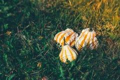 3 декоративных тыквы Стоковые Изображения