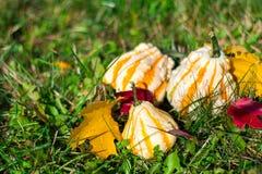 3 декоративных тыквы Стоковые Изображения RF