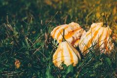 3 декоративных тыквы Стоковая Фотография RF