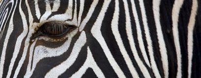 делает по образцу зебру Стоковые Изображения RF