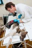 делает veterinarian хирургии стоковое изображение rf