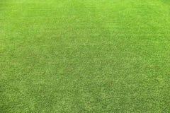 Деланный маникюр зеленый цвет естественной текстуры травы экологический зеленый свежий Стоковое Фото