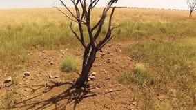 Делать дерево используя трутня видеоматериал