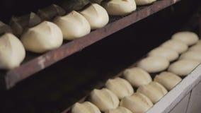 Делать ломоть хлеба в пекарне Много ломтей хлеба в печи сток-видео