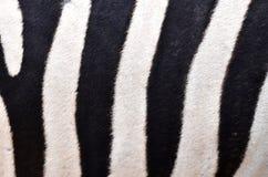 делая по образцу зебра кожи Стоковые Фотографии RF