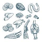 Деликатесы моря Омар, угорь, scallops, икра, изолировал эскизы на белой предпосылке Стоковые Фото