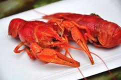Деликатность Crayfish Стоковое фото RF