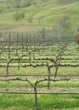 дело делая вино виноградника стоковые изображения
