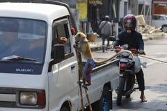 Дело обезьяны на улицах Стоковые Изображения
