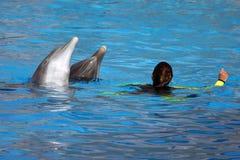 дельфины играя женщину Стоковое Фото
