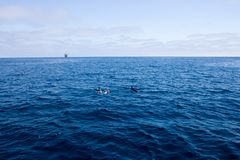 Дельфины и буровая вышка Стоковое Изображение RF