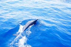 Дельфины ныряя в океане под солнцем Стоковая Фотография RF