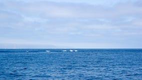 Дельфины около побережья Вентуры, Калифорнии Стоковые Изображения RF