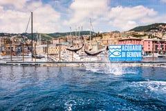 Дельфины скача в самый большой аквариум в Европе стоковые фото