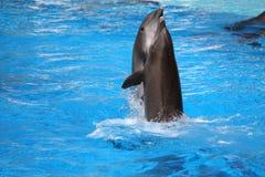 дельфины счастливые стоковая фотография