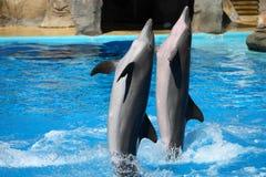 дельфины счастливые Стоковое Изображение