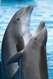 дельфины танцы стоковая фотография
