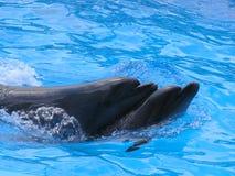 дельфины 2 Стоковые Изображения RF