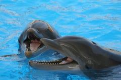 дельфины 2 Стоковая Фотография