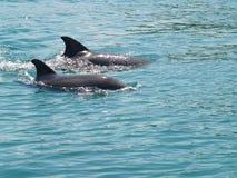 дельфины 2 Стоковое Изображение RF