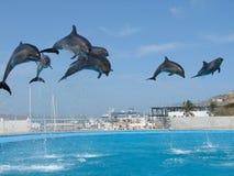 дельфины Стоковое Фото