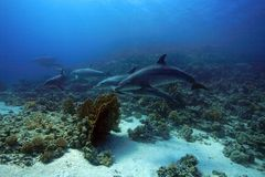 дельфины bottlenose Стоковое Фото