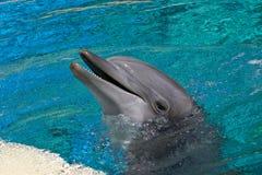 дельфин бутылки обнюхал Стоковая Фотография