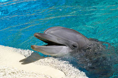дельфин бутылки обнюхал Стоковые Изображения