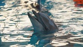 Дельфин в бассейне сток-видео