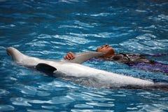 Дельфин и тренер Стоковое Изображение RF