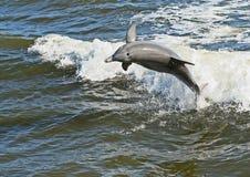 дельфин скачет стоковое фото