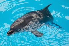 дельфин смотря вверх стоковое изображение rf