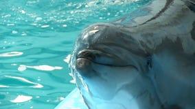 Дельфин усмехается взгляды посетителей гостеприимсв на камере сток-видео