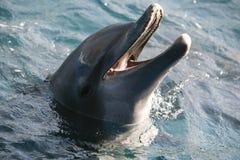 дельфин Стоковые Фотографии RF