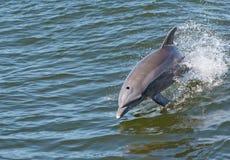 дельфин 5 стоковое изображение rf