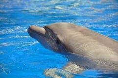 дельфин Стоковая Фотография RF