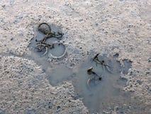2 деля велосипеда в тинной воде стоковая фотография