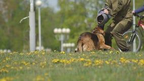 Демонстрация выставки собак с умно натренированными собаками чабана, собаками атакует руку собачьего специалиста, замедленного дв акции видеоматериалы