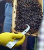 Демонстрация держать пчелы на выставке стоковое изображение rf