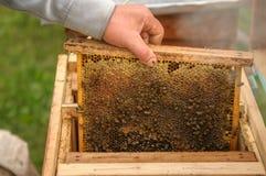 Демонстрация о держать пчелы стоковое фото rf