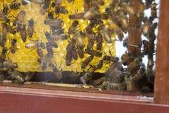 Демонстрация пчел меда стоковое изображение rf