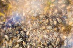 Демонстрация пчел меда Стоковая Фотография RF