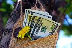 Деньги в конверте на дереве Стоковое фото RF