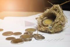 Деньги или монетка в гнезде птицы и на диаграмме белой бумаги Стоковые Фото