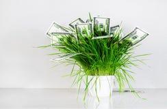Деньги и трава Стоковые Изображения