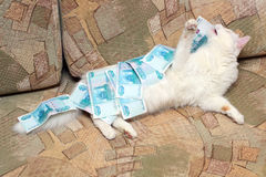 деньги кота вниз Стоковое Изображение RF