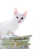 деньги кота Стоковое Изображение RF