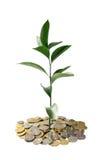 деньги принципиальной схемы растущие стоковые фотографии rf