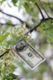 Деньги растут на дереве Стоковое Фото